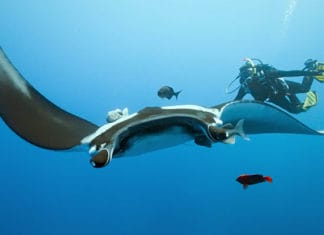 Safe_Diving_With_Stingrays