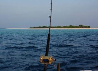 Yellowtail_Fishing_Guide_How_To_Catch_Yellowtail_(2)