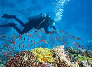 10_Mistakes_New_Scuba_Divers_Make