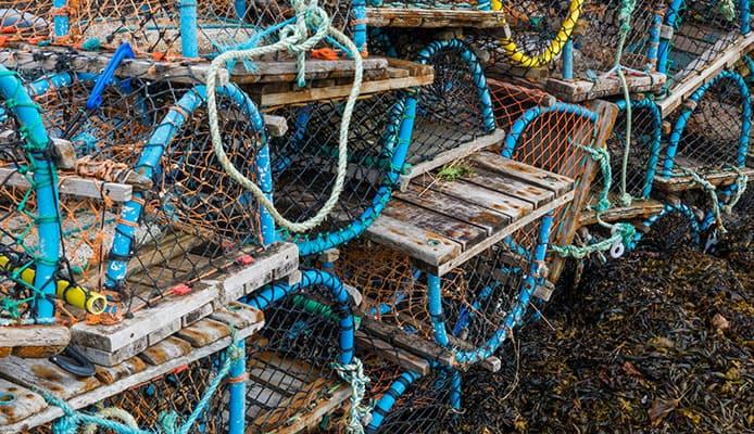 Best_Crab_Traps