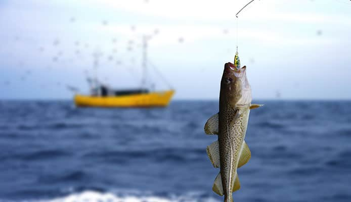 Offshore_Cod_Fishing_Tips