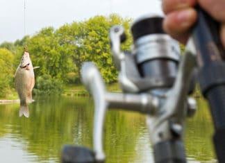 Shellcracker_Fishing_Detailed_Guide