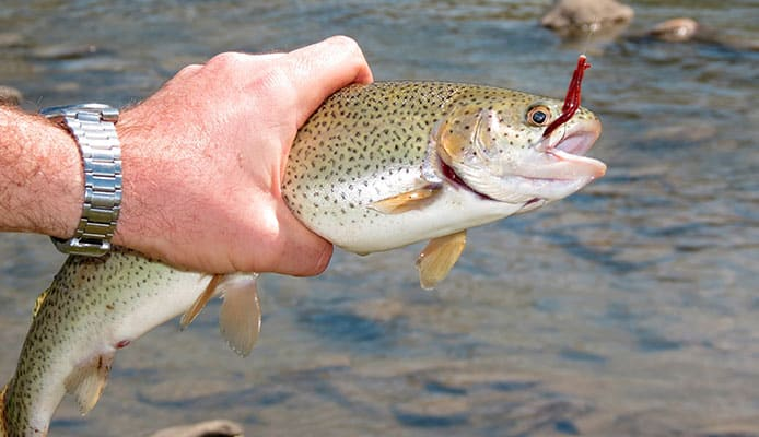 Which_Is_The_Best_Hook_Size_For_Trout_Fishing