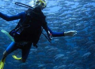 10_Best_Dive_Sites_In_Florida