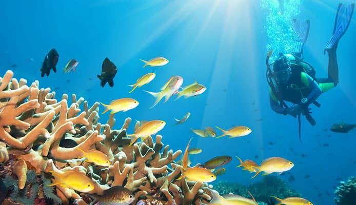 10_Best_Dives_Sites_In_Jamaica