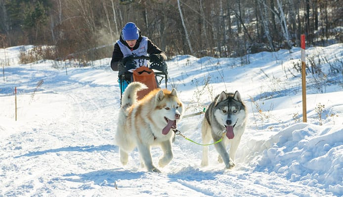 What_Is_Skijoring