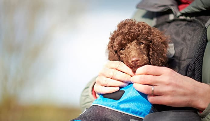 How_To_Choose_Dog_Backpack_Carrier