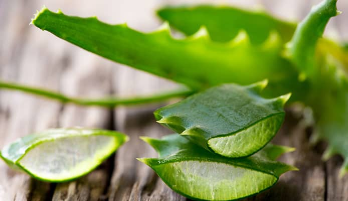 Common_Aloe_Vera_Uses
