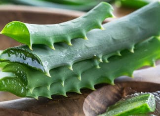 Aloe_Vera_For_Inflamation_Beginner_s_Guide
