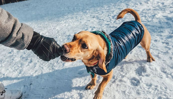 Best_Dog_Winter_Coats