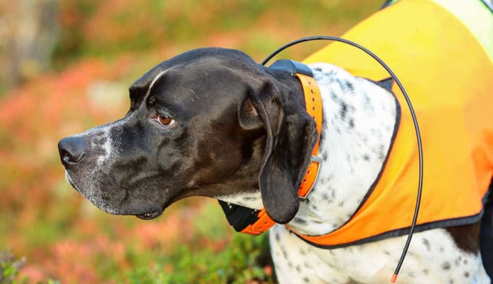 Best_GPS_Tracker_For_Dogs