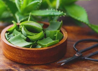Can_You_Eat_Aloe_Vera_Eating_Aloe_Vera_Has_Amazing_Benefits