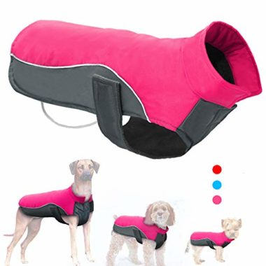 Didog Sport Dog Coat