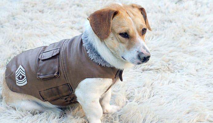How_To_Choose__Dog_Winter_Coat
