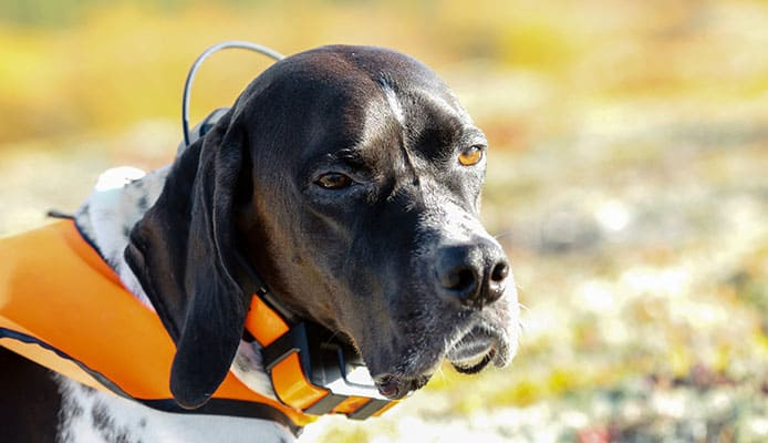 How_To_Choose__GPS_Tracker_For_Dog