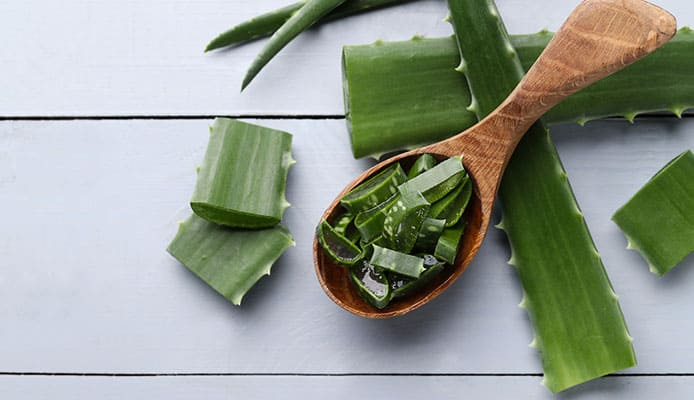 Aloe_Vera_For_Dogs_How_To_Properly_Treat_Itchy_Skin
