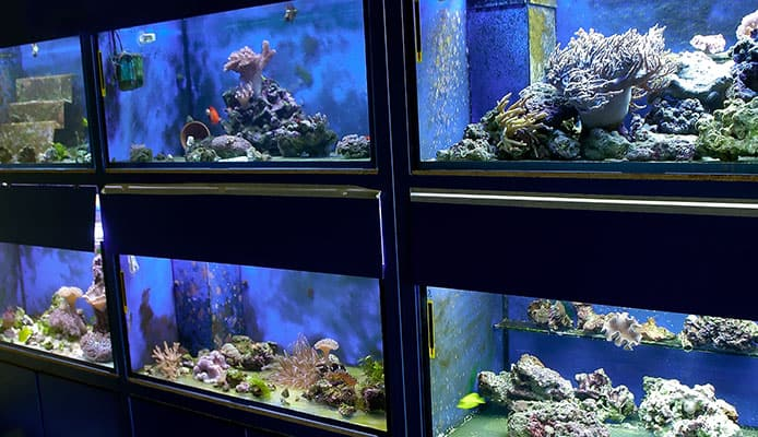 How_To_Choose__Fish_Tank