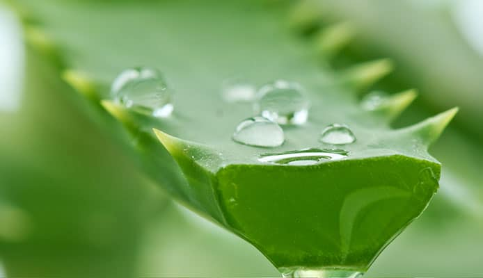 How_To_Safely_Use_Aloe_Vera_For_Constipation