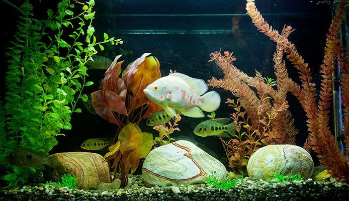 Which_Fish_Tank_Is_Better_Glass_Or_Acrylic