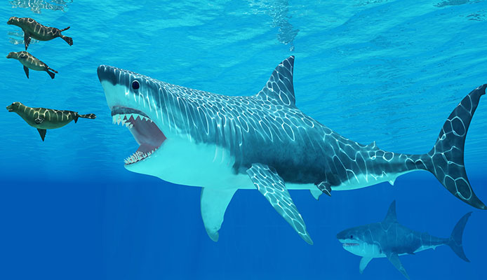 5_Effective_Ways_How_To_Survive_A_Shark_Attack