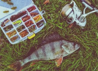 How_do_you_identify_a_largemouth_bass_spotted_bass_and_smallmouth_bass