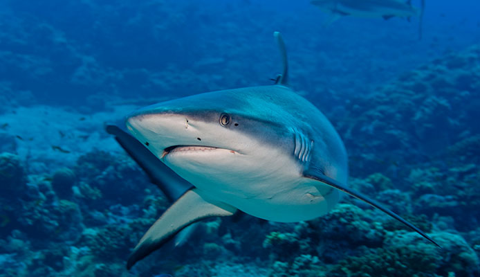5_Tips_How_To_Avoid_Shark_Attacks