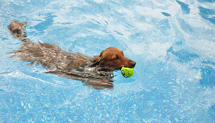 Do_you_need_to_teach_a_dog_to_swim_