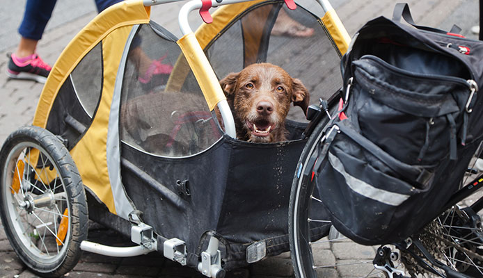 Dog_Bike_Trailers
