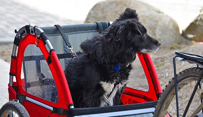 How_To_Choose_Dog_Bike_Trailers