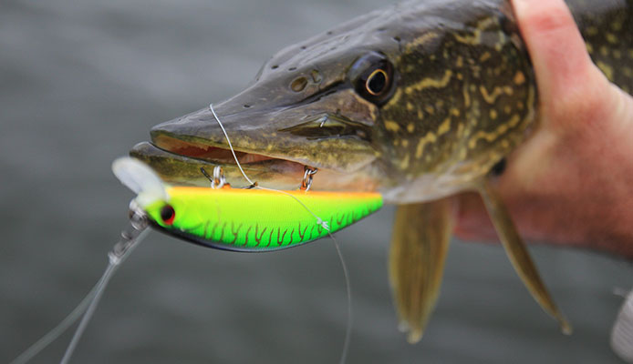 How_To_Choose_Topwater_Lures