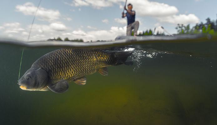How_To_Choose_Underwater_Fishing_Camera