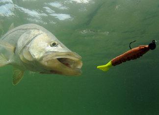 Underwater_Fishing_Cameras